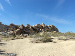 Joshua Tree National Park Indian Cove campground