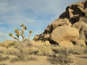 Joshua Tree National Park Split Rock Loop Trail