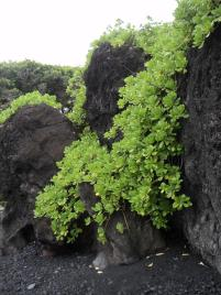 Haleakala National Park, black lava rock and sand, hana, maui