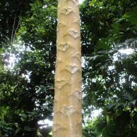 papaya tree trunk, hearts, kisses