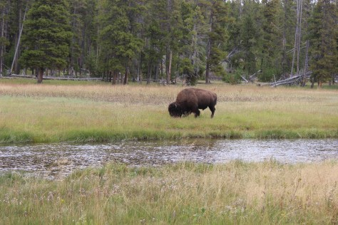 Grand Tetons, Yellowstone National Park, geysers, volcano, hot springs, wildlife, bison, elk, hiking, trails