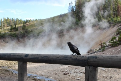 Yellowstone National Park, geysers, volcano, hot springs, wildlife, bison, elk, hiking, trails