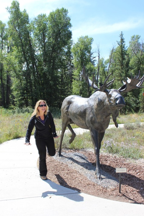 elk, Craig Thomas Discovery & Visitor Center, Grand Teton National Park and area, wildlife viewings, Wyoming, Jenny Lake, Colter Bay, Jackson Hole, moose, mule deer, bison