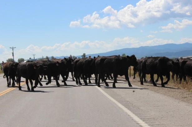 teardrop trailer, vintage trailer, tiny trailer, national park road trip, Yellowstone, Grand Teton, Utah, Wyoming, wildlife