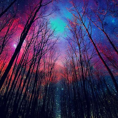lovely night woods