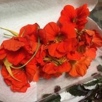 Nasturtium (edible) flowers